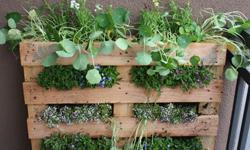 Construction d'un jardin vertical avec un planteur fait d'une palette