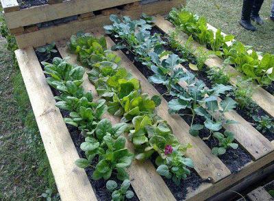 Costruire un piccolo giardino pallet per il vostro terrazzo o patio