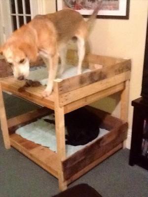Letto a castello per cani realizzati con pallet! 3