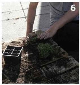Le istruzioni su come creare un muro verde con un singolo pallet  6